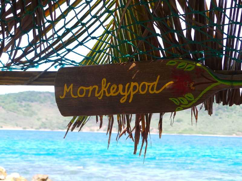 The Tiki Hut is known as the Monkeypod