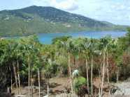 Yellowbird Lane Land for Sale Peterborg St Thomas